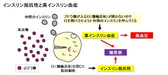 インスリン抵抗性により高インスリン血症になることを示す図