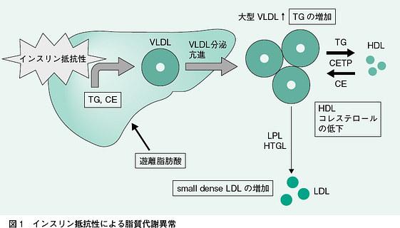高インスリン血症により中性脂肪が上がりHDL-Cが下がることを示した図