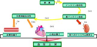 高インスリン血症により腎尿細管でのナトリウム再吸収が亢進し高血圧になることを示した図