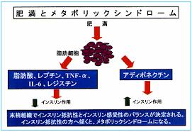 悪玉アデイポカインがインスリン抵抗性を誘導することを示す図