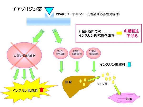 ピオグリタゾンの作用機序を解説する図