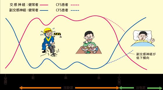 交感神経 副交感神経の活動の日内変動を示す図