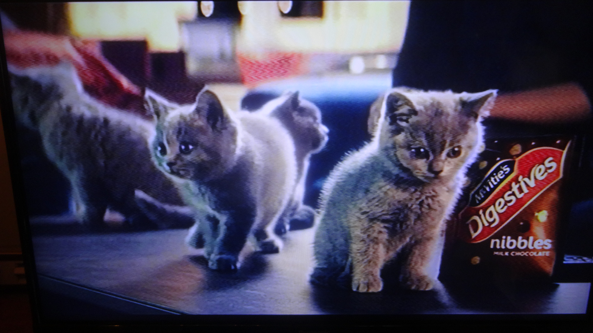 仔猫たちが登場するTVのCM