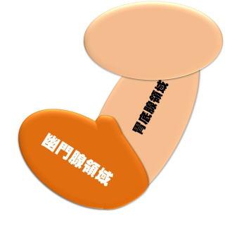 胃の胃底腺 幽門腺領域の位置