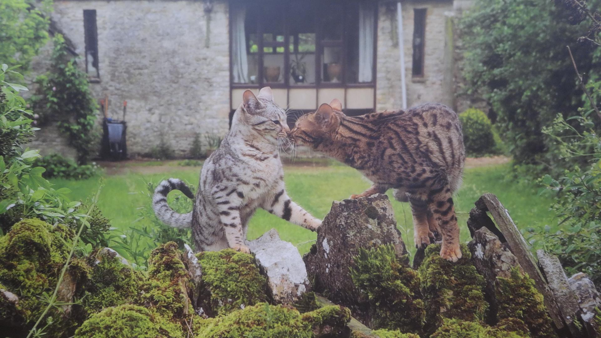 世界各国のネコの写真2