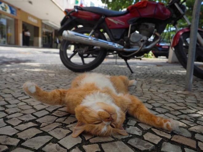 路上で大胆なポーズで寝る猫