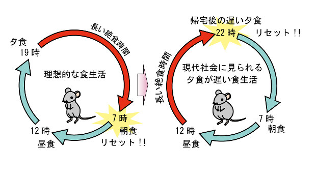 食事をする時間によっても 体の日内変動に影響が出てくることを示す図
