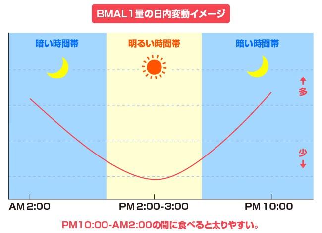 BMAL1量の日内変動パターンを示すグラフ