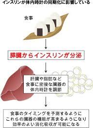インスリンが体内時計同調効果を高めることを示す図