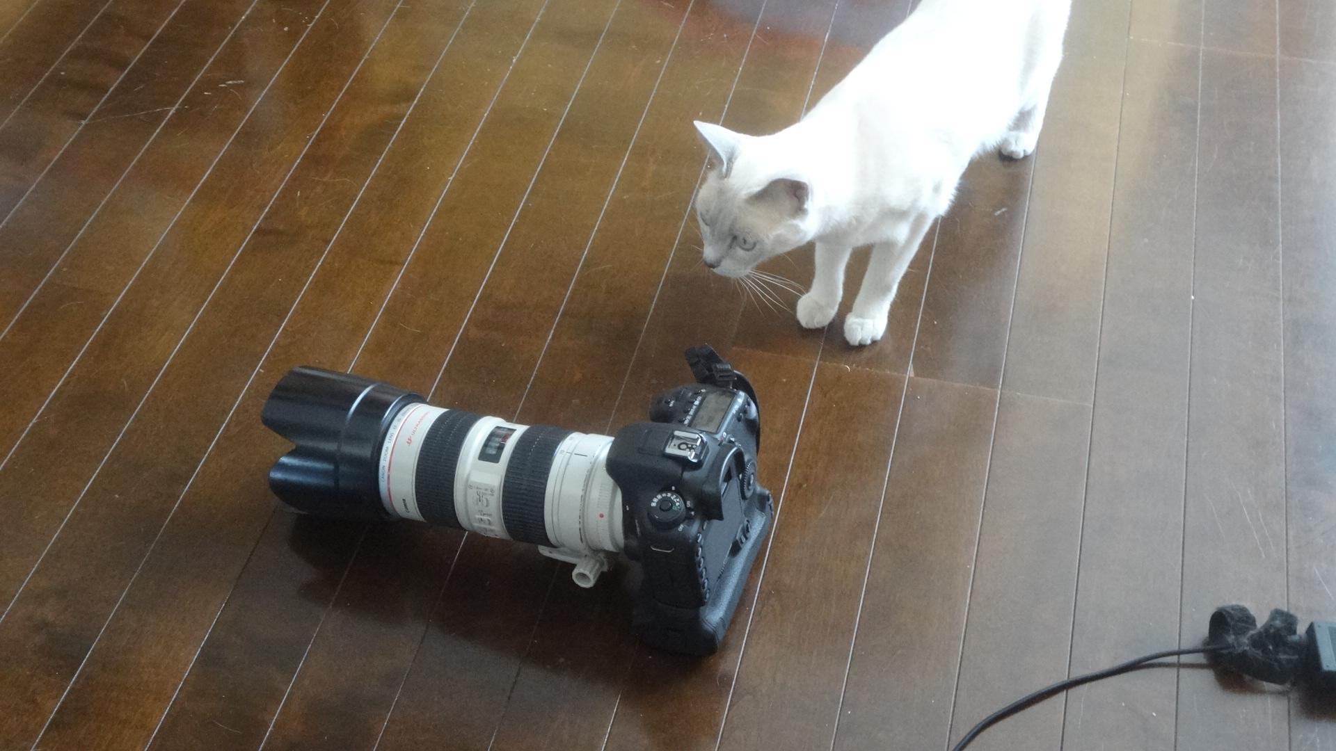 カメラに興味津々の楓