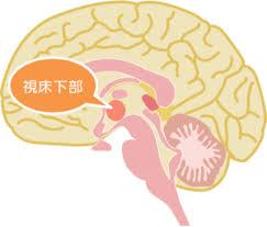 視床下部が自律神経を動かしていることを示す図
