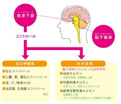 ストレスやショックでホルモン分泌に異常が生じると自律神経の働きが乱れることを示す図