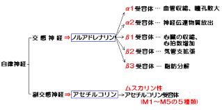 ノルアドレナリンの受容体の種類をまとめた表