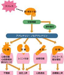 ストレスで分泌されるアドレナリン ノルアドレナリンが全身の臓器に及ぼす影響をまとめた図