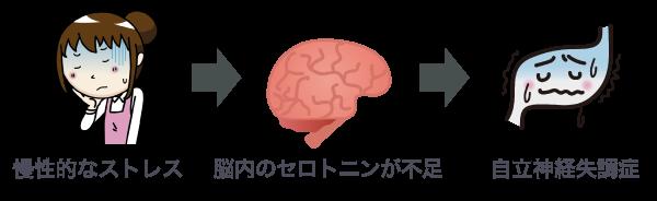 ストレスによるセロトニン不足が自律神経失調症に影響を及ぼすことを示す図