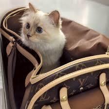 ヴィトンのバッグに入るシュペットちゃん