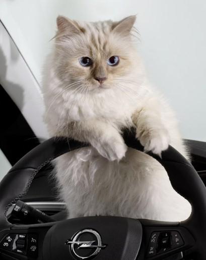 高級車のハンドルを握るシュペットちゃん