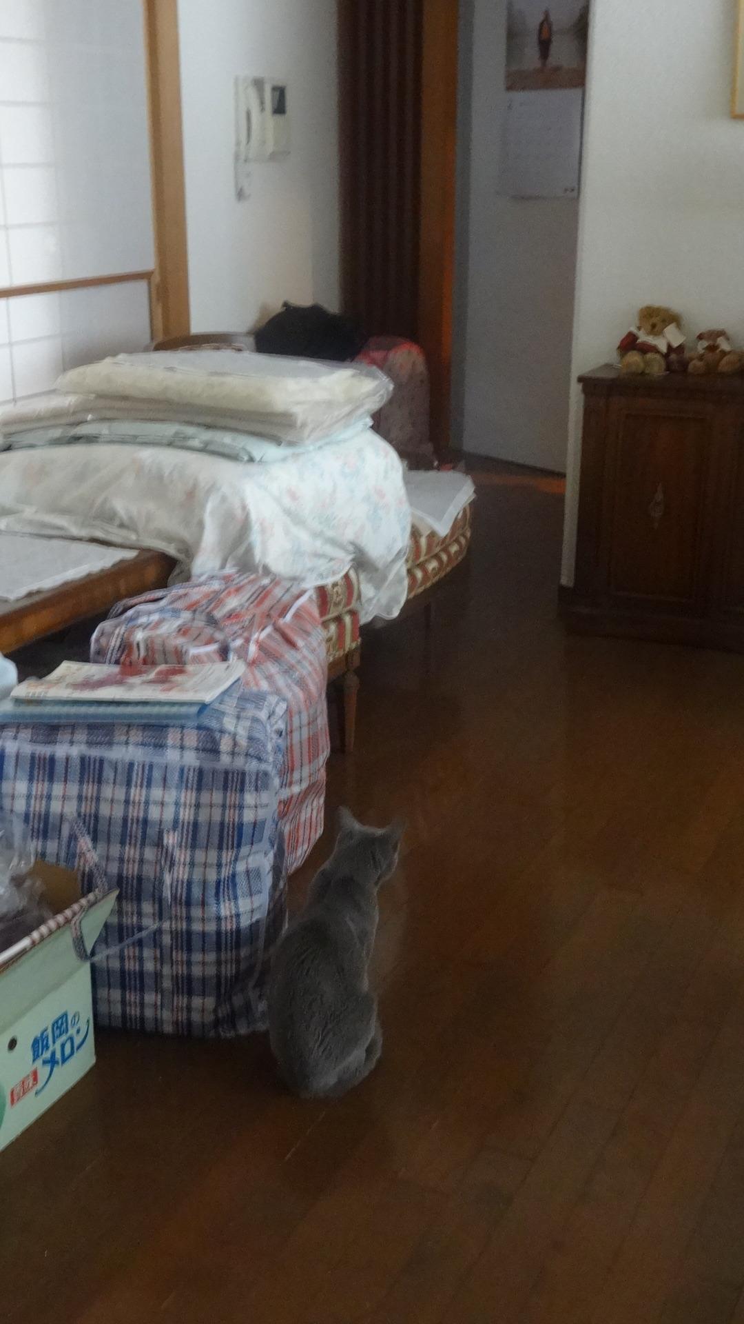 かつて自分が過ごしていた書き手の部屋をちょっと遠くから眺めるデイジー