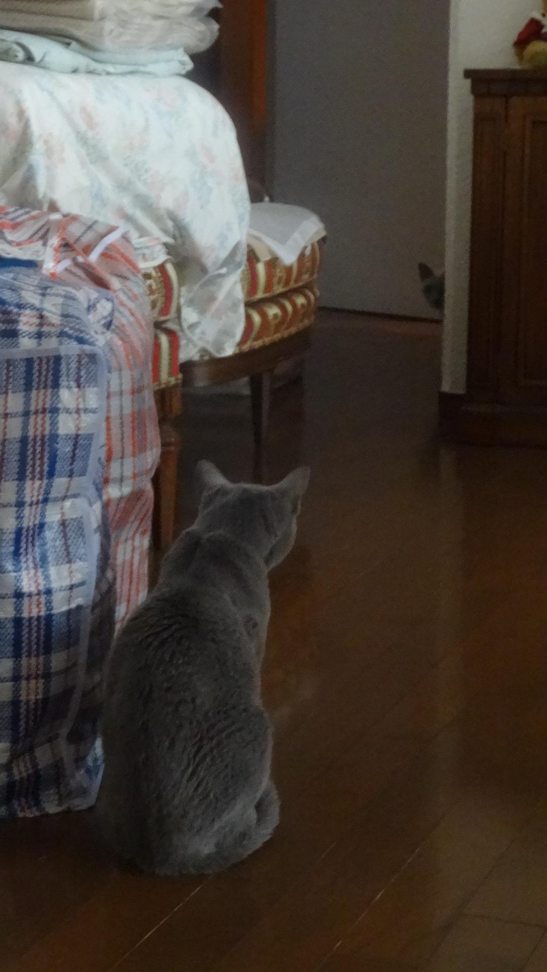 柱の後ろに身を潜めデイジーの姿を目視している楓