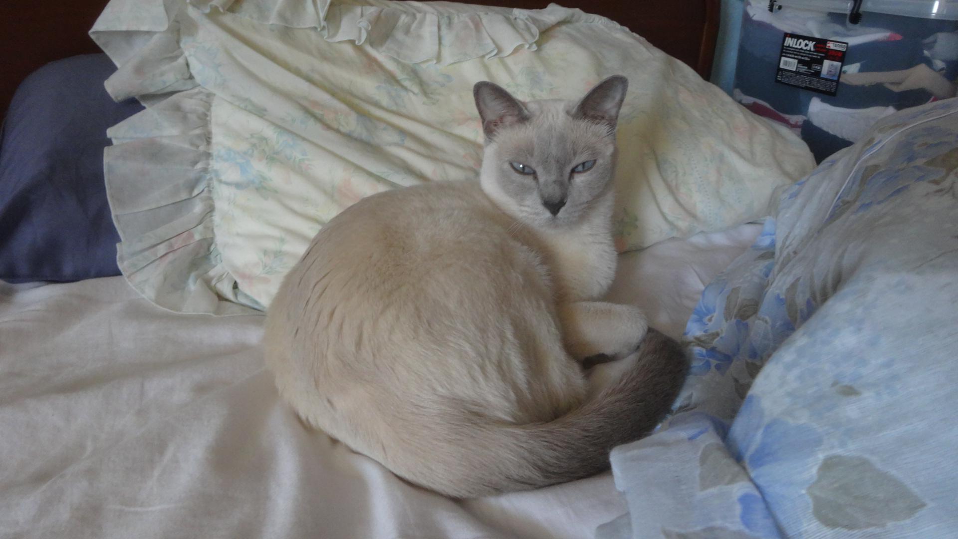 ベッドで寝る楓