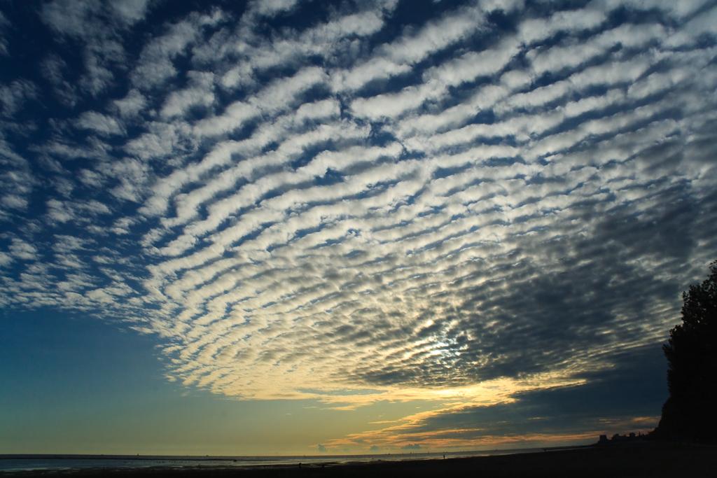 夏の終わりの空に見えるイワシ雲