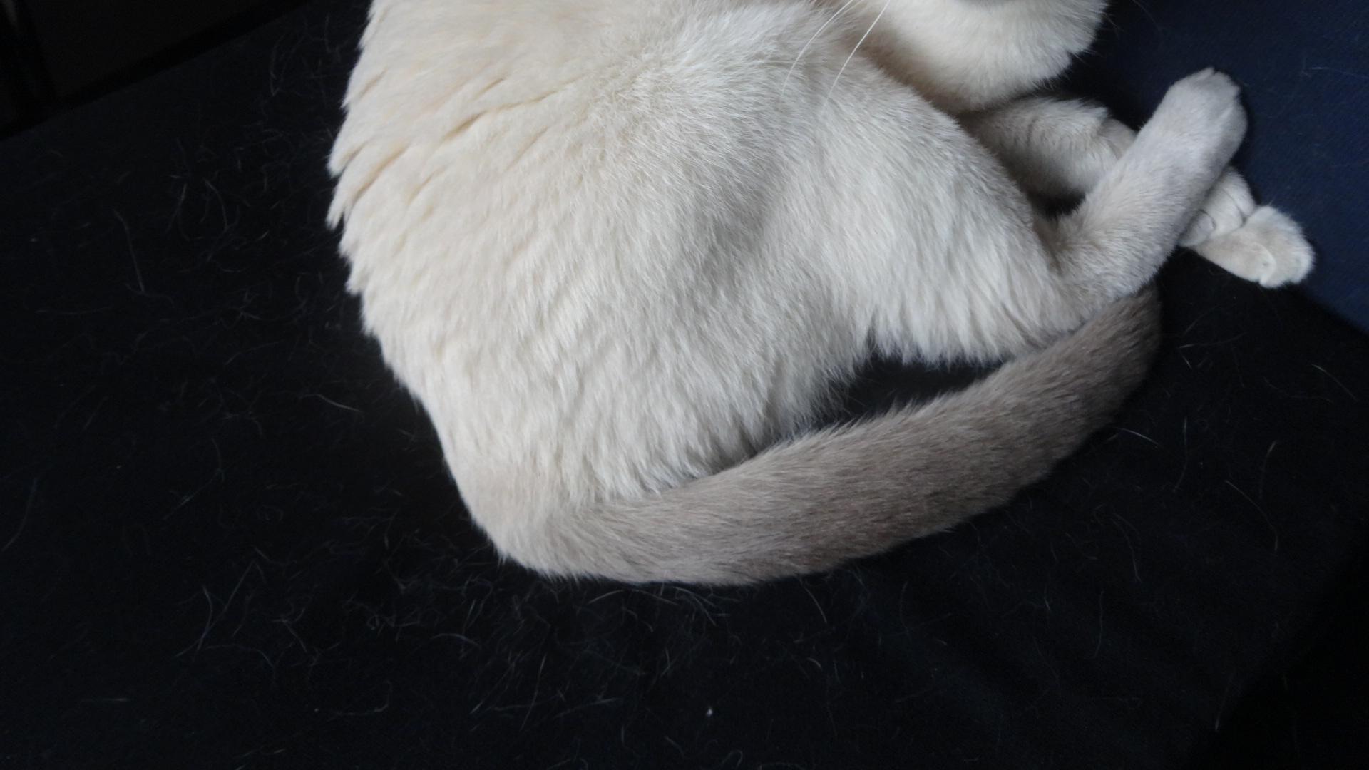 クッションの真ん中の凹んだ部分にしっかりとお尻を入れている楓