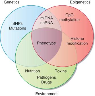 体質と遺伝子多型・エピジェネテイクス・環境因子の関連を示す図