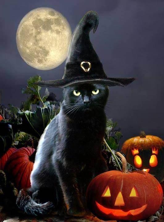 魔女の姿をして月夜に佇むネコのイラスト