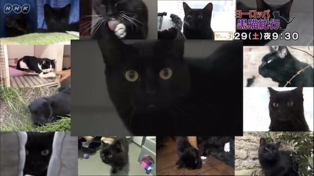 ヨーロッパ黒猫物語という特番の画面