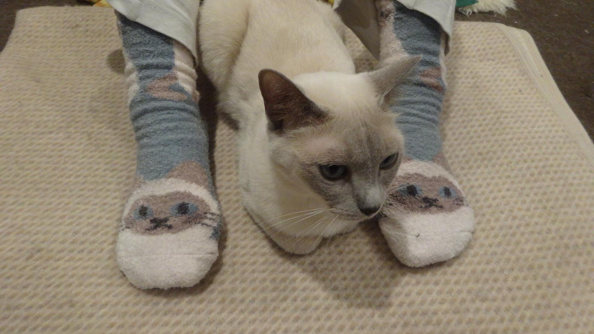 ネコ柄の靴下を履いた両足の間に寝る楓