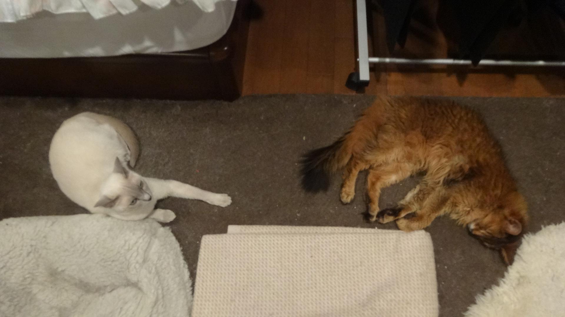 並んで寝ているローズと楓