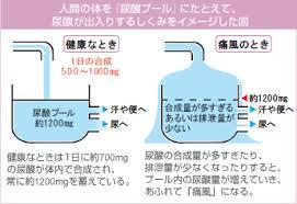 痛風の際の体内における尿酸の動態