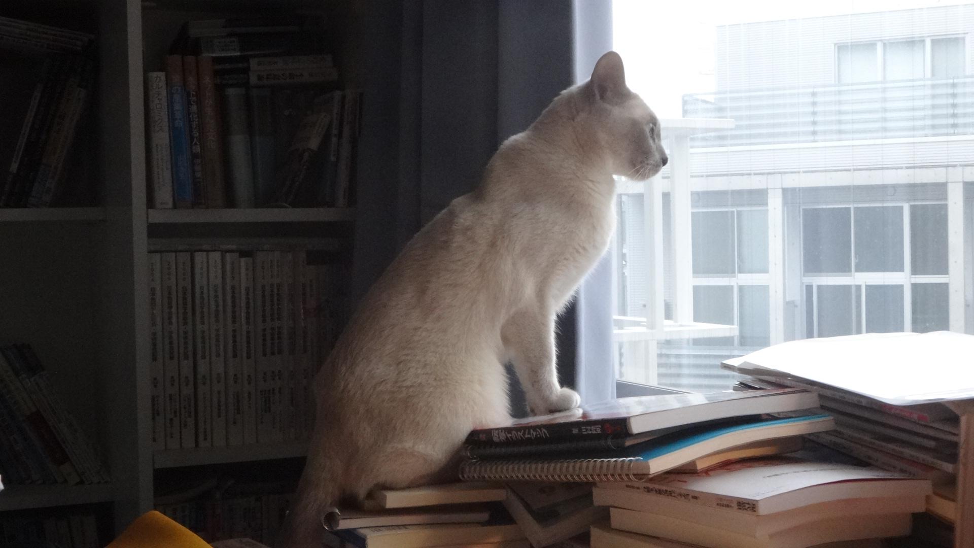 窓の外を眺め始める楓