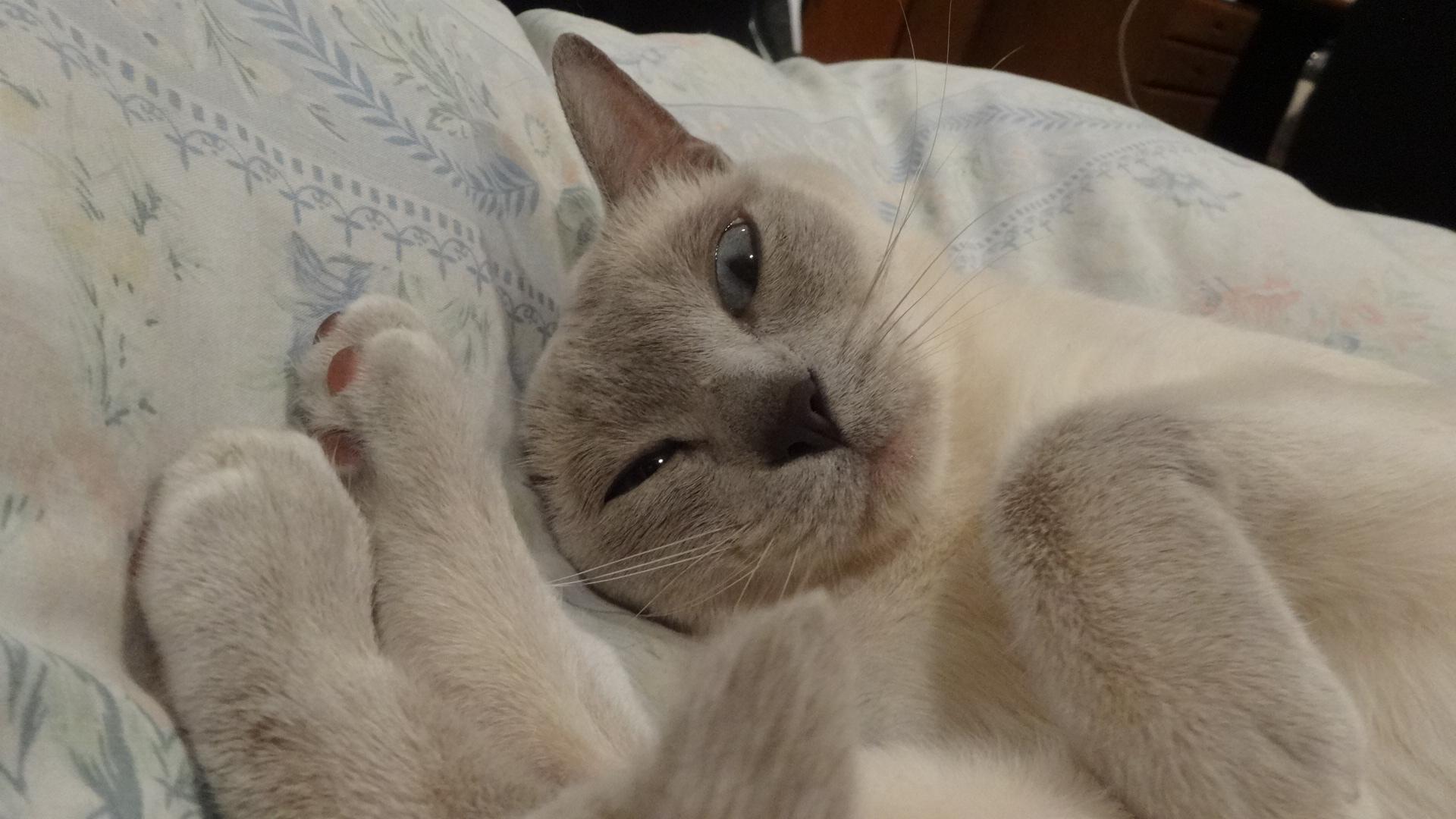 眠たそうにしている楓