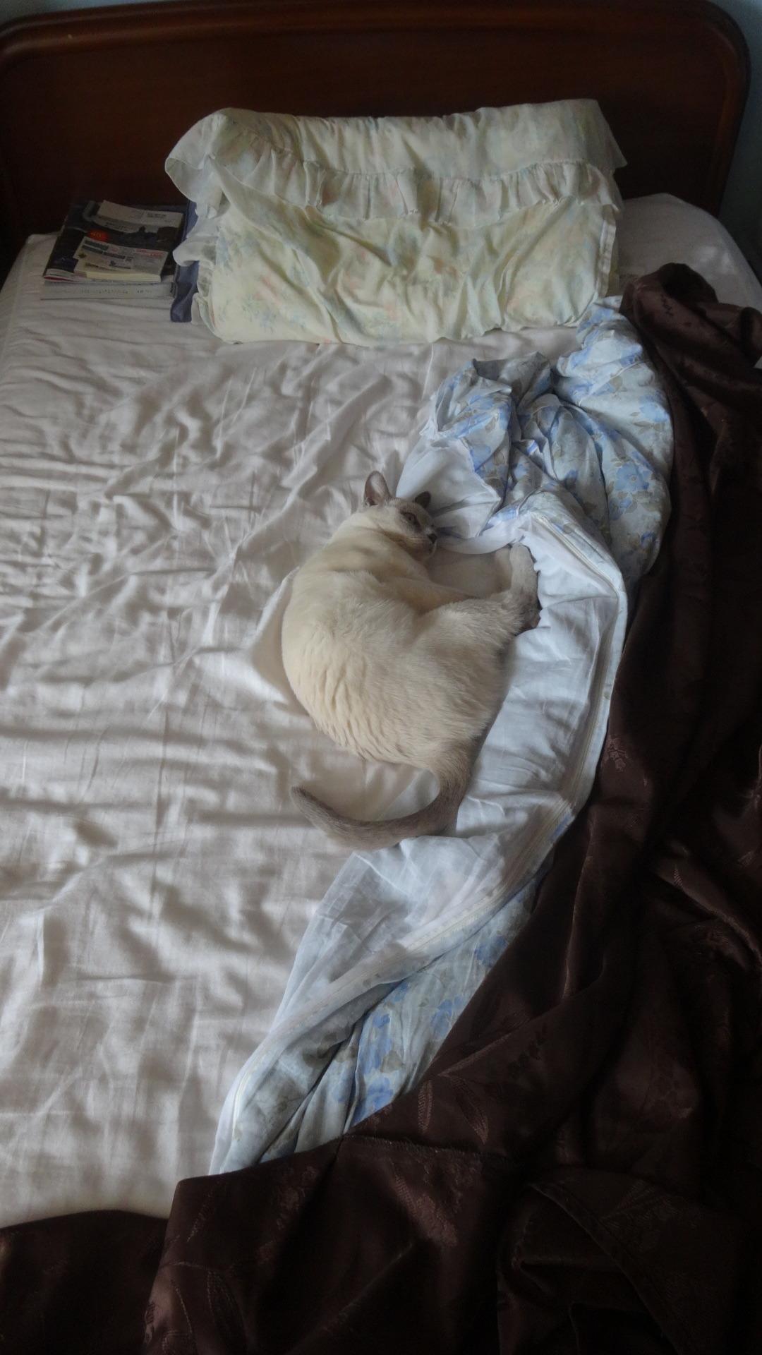 ベッドのど真ん中で寝る楓