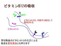ビタミンB12の吸収過程を示した図