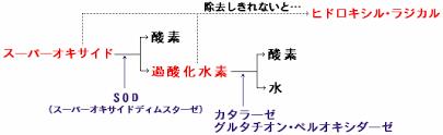 カタラーゼの働きを示す図