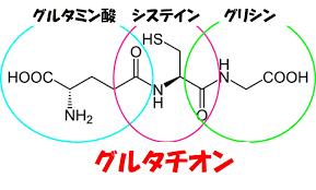 グルタチオンを構成する3つのアミノ酸を示す図