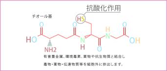 チオール基の抗酸化作用を示した図