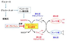 チオレドキシンの働きを示す図