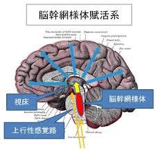 上行性脳幹網様体賦活系により覚醒状態になることを示す図