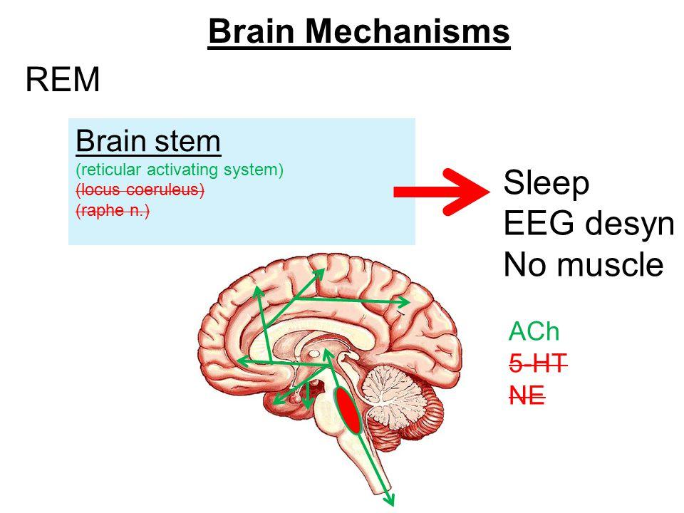 アセチルコリン投射系がレム睡眠を作っている中枢であることを示す図
