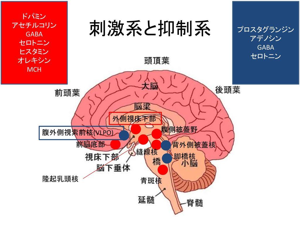 脳内の抑制性物質 刺激性物質についてまとめた図