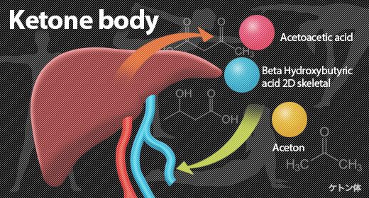 肝臓でケトン体が産生されることを示した図