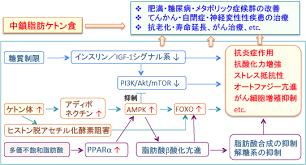 ケトン食の効果発現機序を解説する図