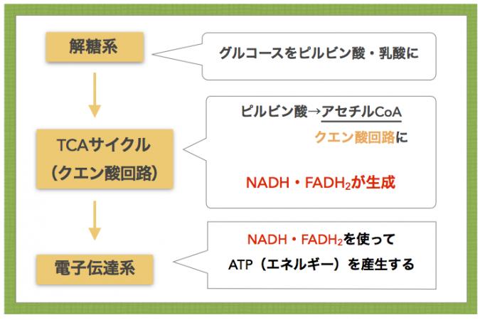 解糖系 TCA回路 電子伝達系でNADH・FADH2が使われエネルギーが産生されることを示す図