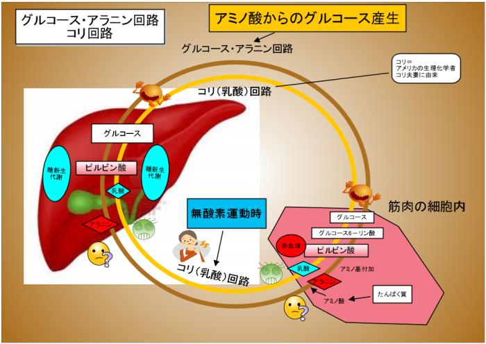 コリ回路の説明図