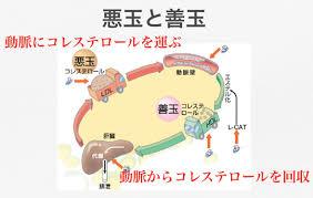 LDLコレステロールがコレステロールを全身に運んでいる様子を示した図