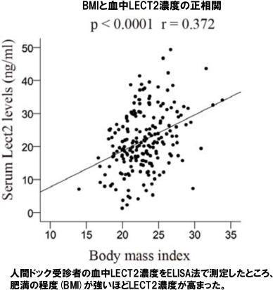 lect2値とBMIの正の相関を示すグラフ