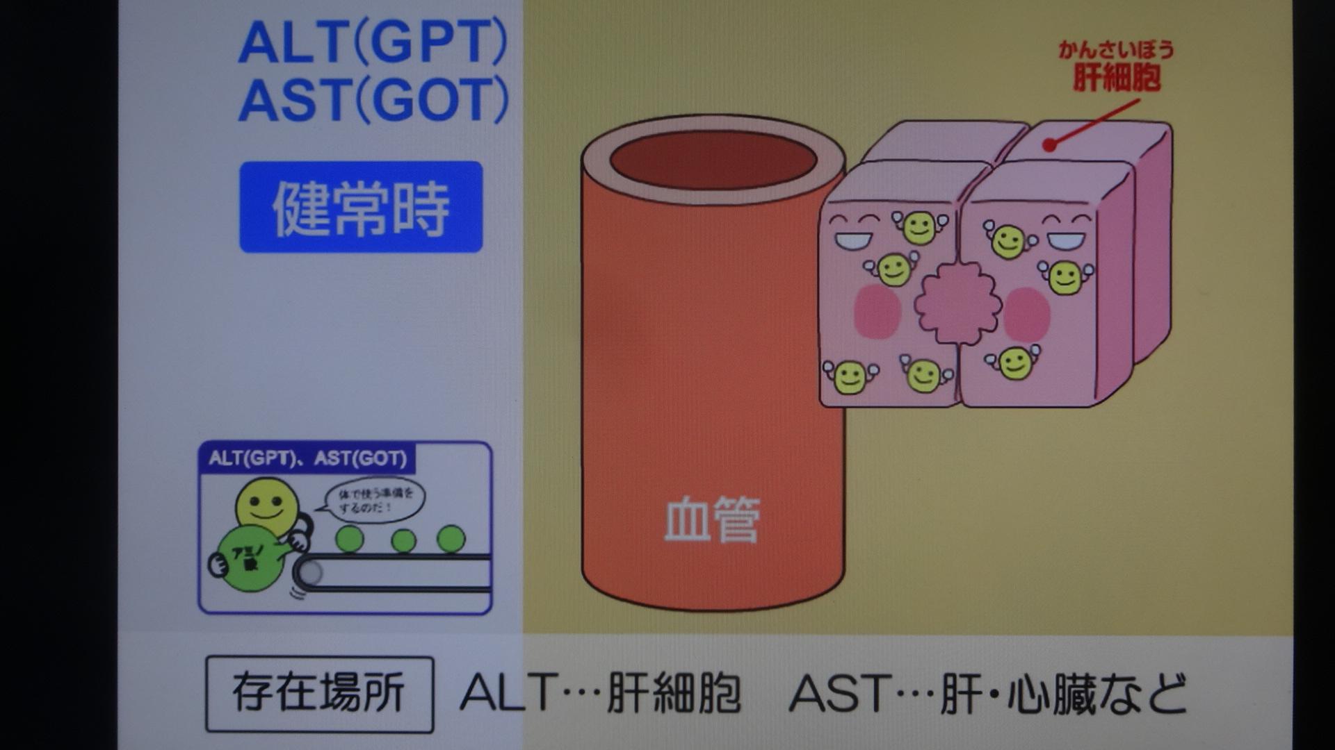 AST ALTは普段は細胞の中で働いていることを示す図